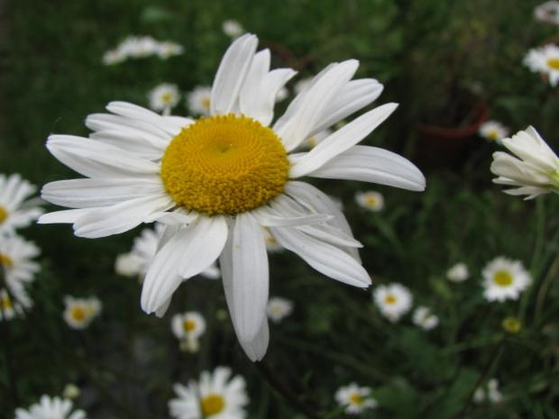 2009-06-03 003